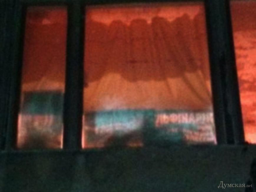 В бассейне одесского стадиона держат краснокнижных дельфинов, - СМИ (фото) - фото 4