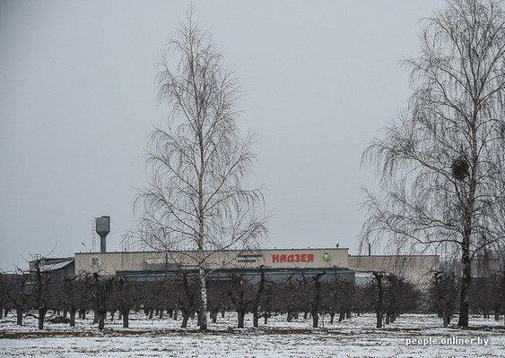 Жизнь в гродненском колхозе «Квасовка»: зарплата 7 млн и свинина за 60 тыс. (Фото), фото-6
