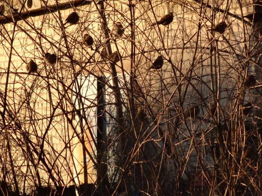 «Солнечный Мариуполь под звуки разрывов»  Фотопроект (фото) - фото 1