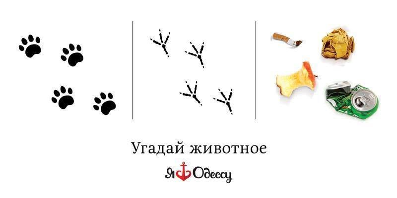 В Одессе появится забавная социальная реклама (ФОТО) (фото) - фото 1