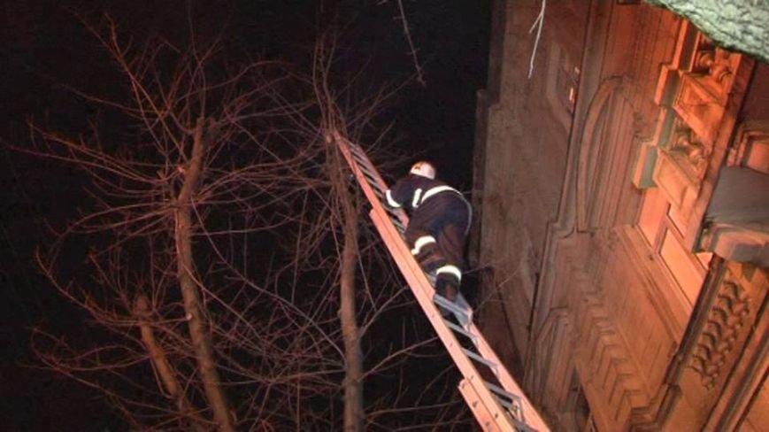 Як у Львові рятувальники кицьку з дерева знімали (ФОТО), фото-3