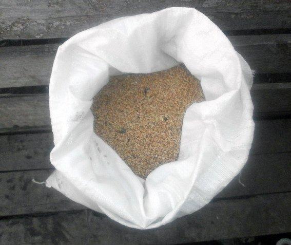 Красноармейские правоохранители предотвратили кражу 700 кг зерна из вагона (фото) - фото 2