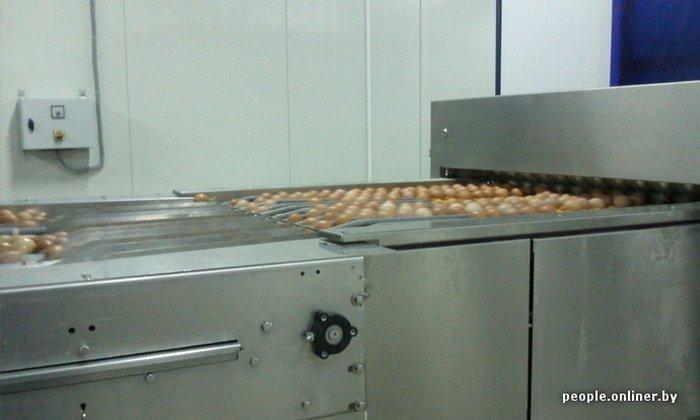 Фоторепортаж: как производят гродненские яйца под марками «Боярские», «Большие» и «Ну очень большие», фото-31