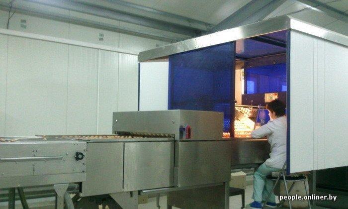 Фоторепортаж: как производят гродненские яйца под марками «Боярские», «Большие» и «Ну очень большие», фото-30