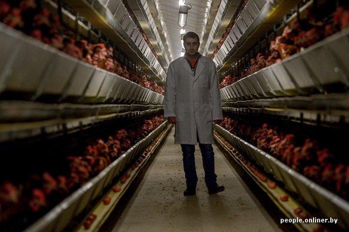 Фоторепортаж: как производят гродненские яйца под марками «Боярские», «Большие» и «Ну очень большие», фото-16
