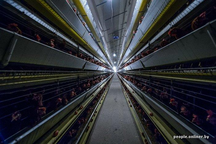 Фоторепортаж: как производят гродненские яйца под марками «Боярские», «Большие» и «Ну очень большие», фото-17