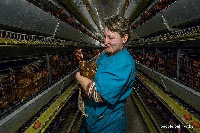 Фоторепортаж: как производят гродненские яйца под марками «Боярские», «Большие» и «Ну очень большие», фото-26