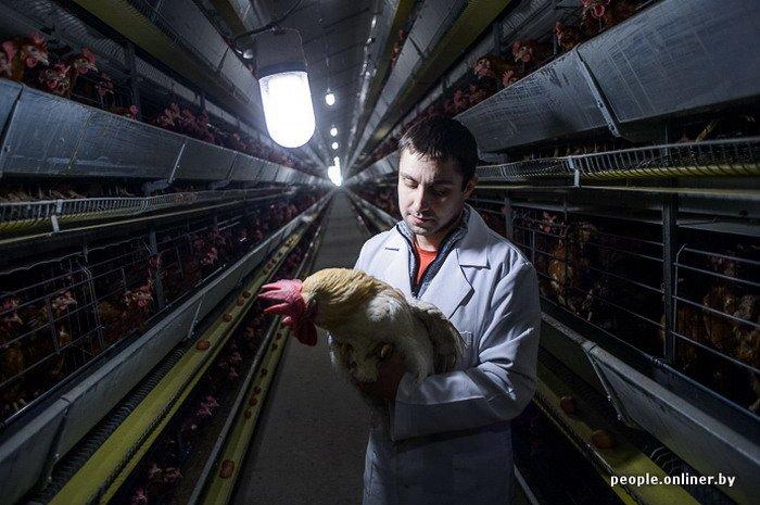 Фоторепортаж: как производят гродненские яйца под марками «Боярские», «Большие» и «Ну очень большие», фото-24
