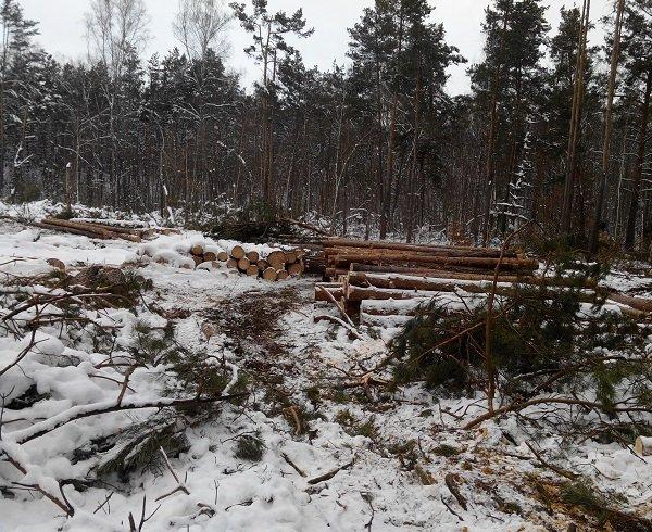 На Троещине идет массовая вырубка леса (ФОТО) (фото) - фото 1