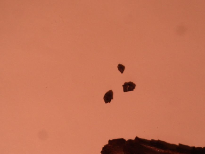 В районе Мариуполя Россия применила новейший вид оружия массового поражения,- Шидлюх (ВИДЕО+ФОТО) (фото) - фото 1