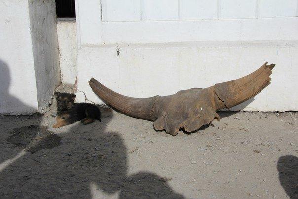 Волгоградские водолазы нашли череп древнего животного (фото) - фото 1