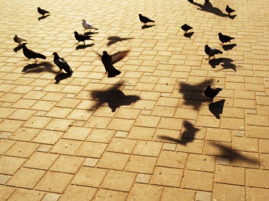Фотопятница « Жизнь тени. Приключения в перевернутом мире» (фото) - фото 1