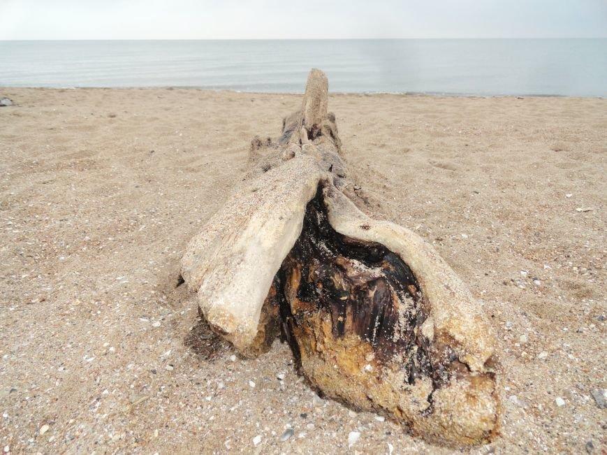 Мариуполь. Море в первый день весны (ФОТОПРОЕКТ) (фото) - фото 1