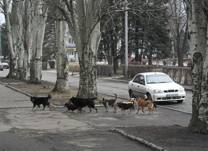 «Собачий вопрос» в Красноармейске завис в воздухе (ФОТО), фото-3