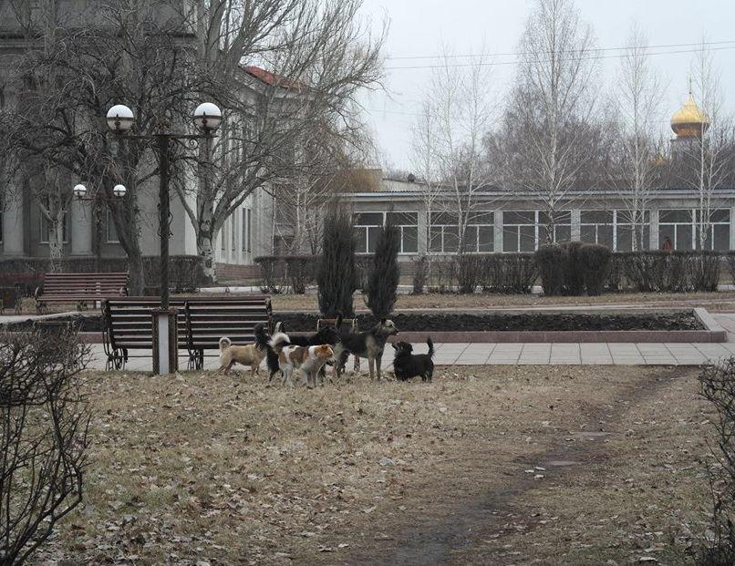 «Собачий вопрос» в Красноармейске завис в воздухе (ФОТО), фото-2