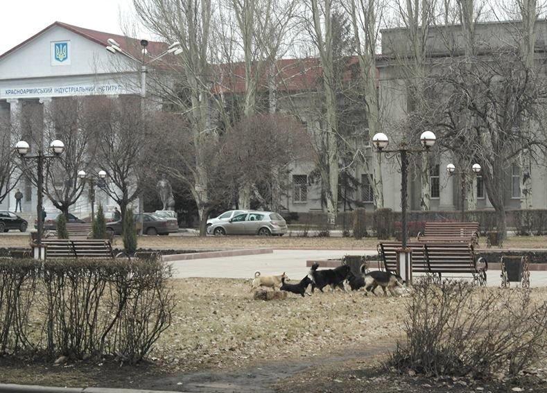 «Собачий вопрос» в Красноармейске завис в воздухе (ФОТО), фото-1