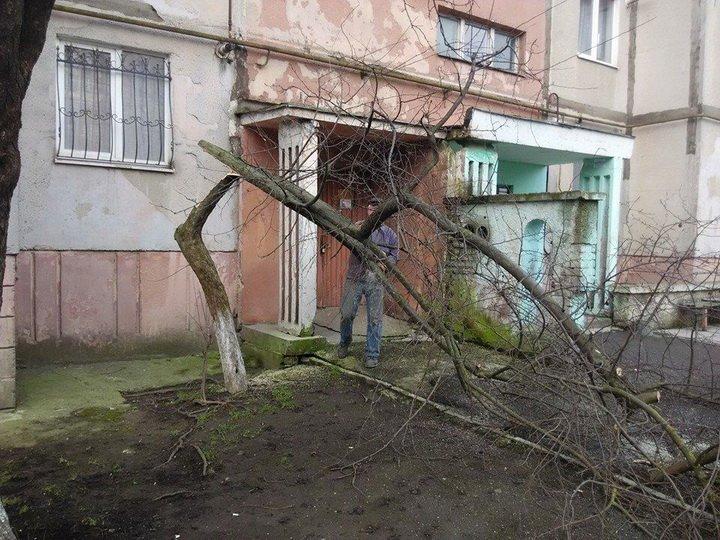 В Івано-Франківську масово спилюють дерева (ФОТО) (фото) - фото 2