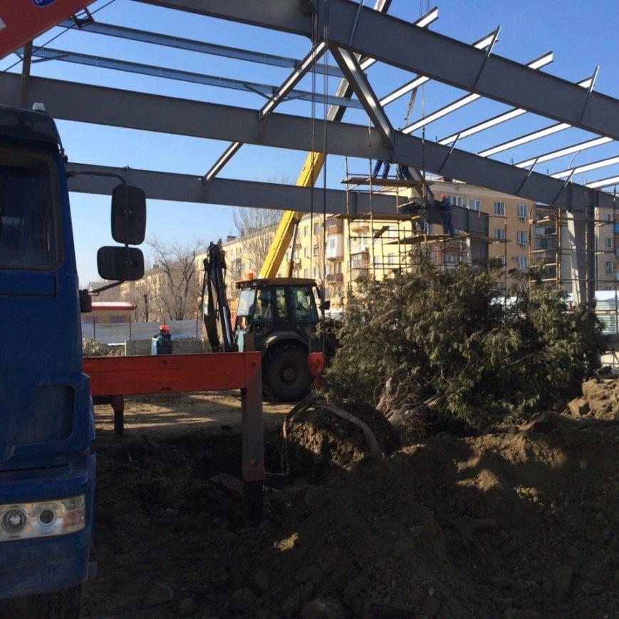 В Краснооктябрьском районе спасли от уничтожения семиметровую тую (фото) - фото 1