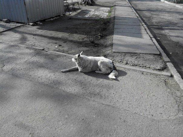 Горожане просят обратить внимание властей на регулирование количества бездомных животных в Николаеве (фото) - фото 4