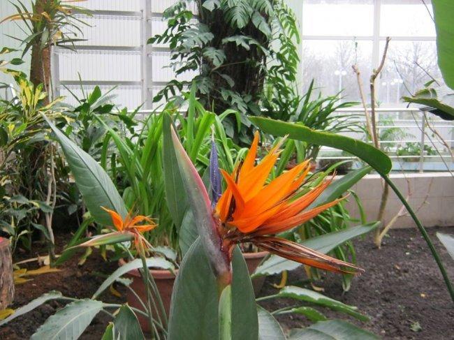 Донецкий ботанический сад приглашает окунуться в настоящую весну, фото-2