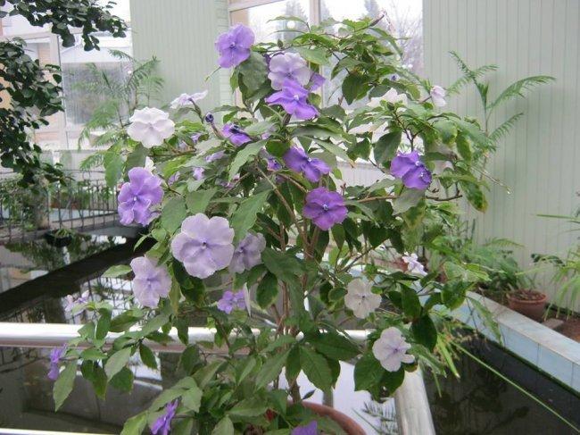 Донецкий ботанический сад приглашает окунуться в настоящую весну, фото-5