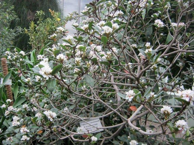 Донецкий ботанический сад приглашает окунуться в настоящую весну, фото-3