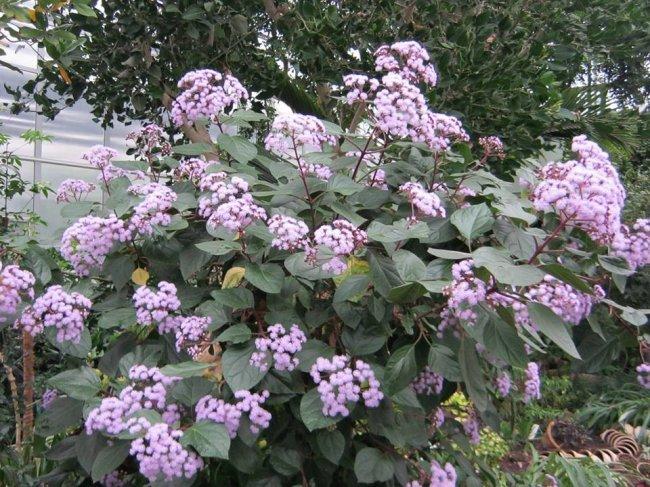 Донецкий ботанический сад приглашает окунуться в настоящую весну, фото-4