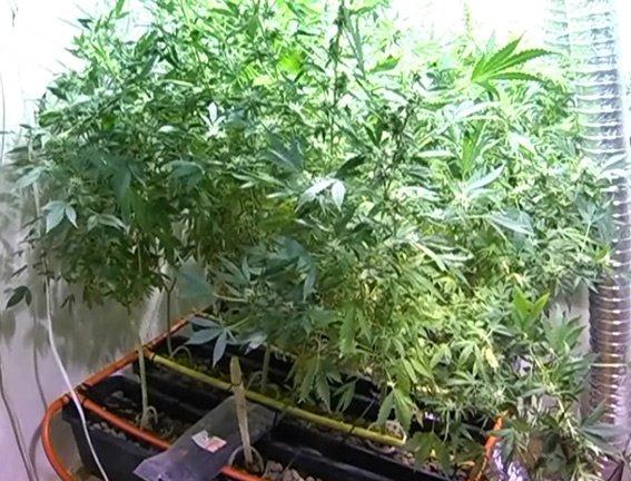 Житель Днепропетровской области снимал квартиру для выращивания марихуаны (фото) - фото 1