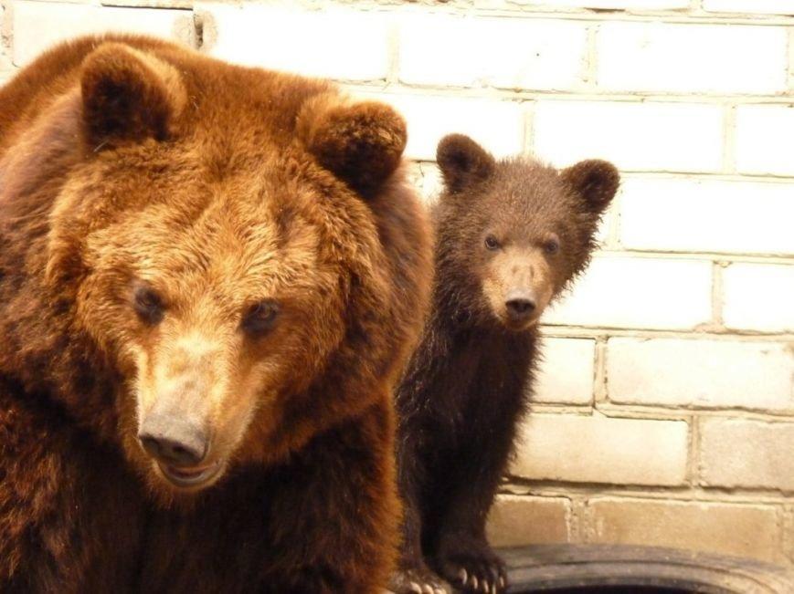 У Черкаському зоопарку ведмедиця Юлька народила трьох малюків (фото) - фото 2