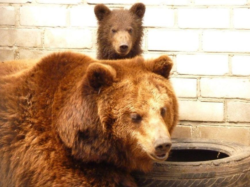 У Черкаському зоопарку ведмедиця Юлька народила трьох малюків (фото) - фото 1