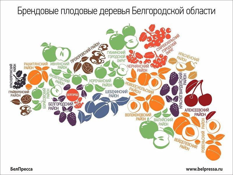 Что это было? Первые цветы, документы, штрафы и звуки этой весны в Белгороде, фото-2