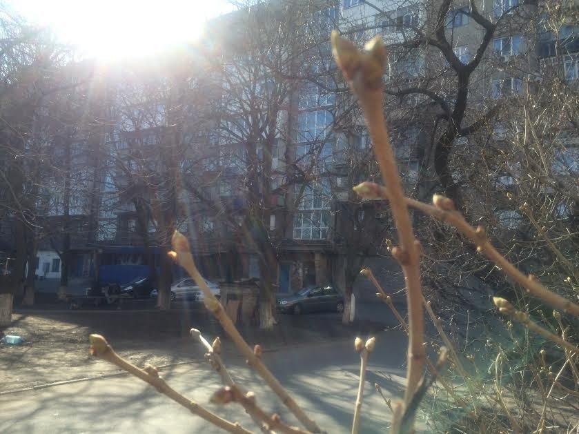 Снимайте шубы! В Мариуполе тепло будет господствовать до конца марта (фото) - фото 2