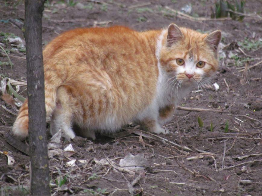 Фотопятница: «Планета мартовских котов», фото-12