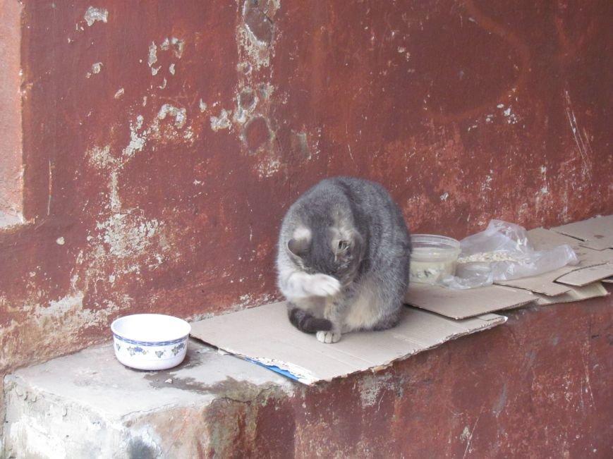 Фотопятница: «Планета мартовских котов», фото-24