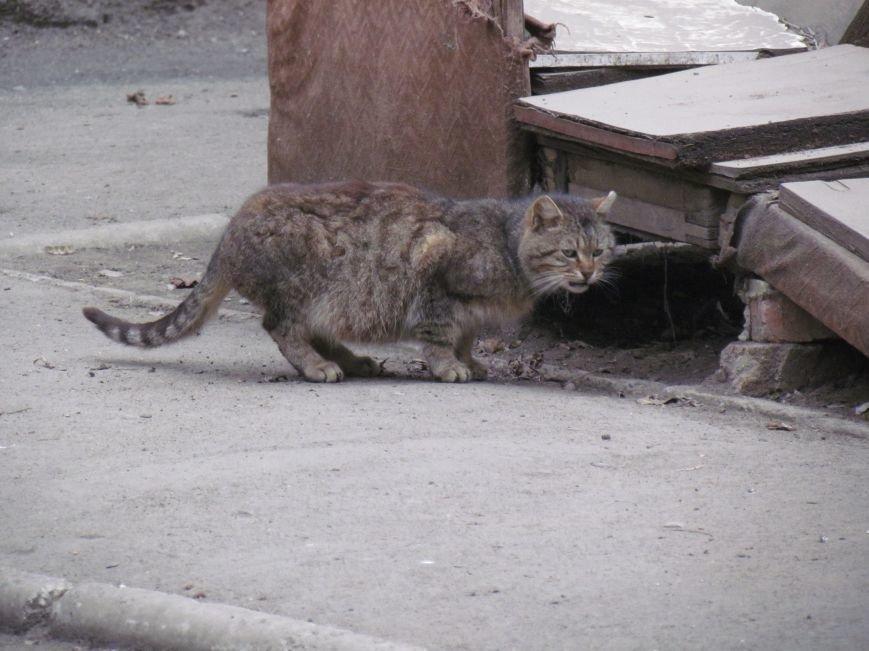 Фотопятница: «Планета мартовских котов», фото-21