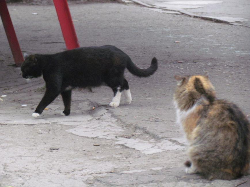 Фотопятница: «Планета мартовских котов», фото-11