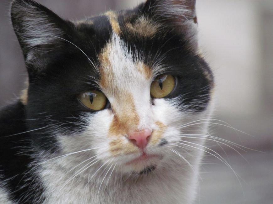 Фотопятница: «Планета мартовских котов», фото-10