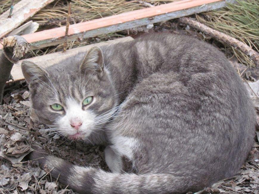 Фотопятница: «Планета мартовских котов», фото-27