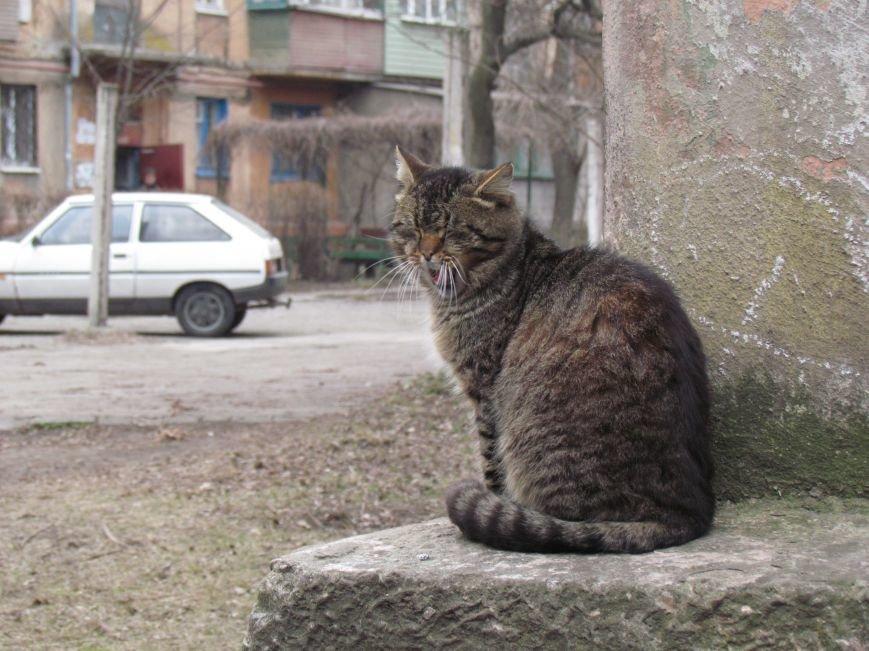 Фотопятница: «Планета мартовских котов», фото-25