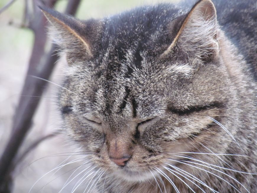 Фотопятница: «Планета мартовских котов», фото-17