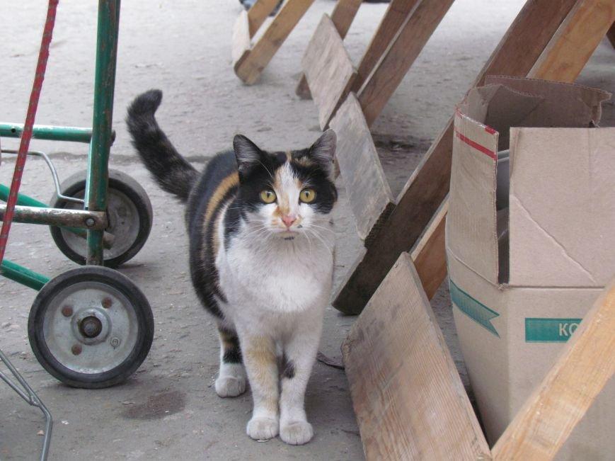 Фотопятница: «Планета мартовских котов», фото-14