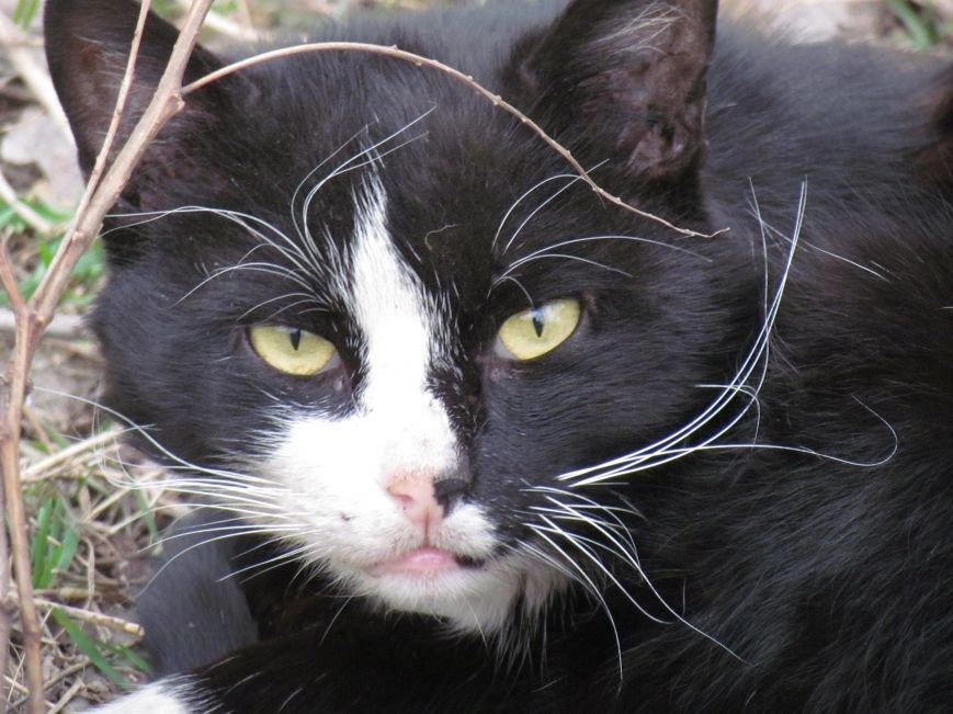 Фотопятница: «Планета мартовских котов», фото-28