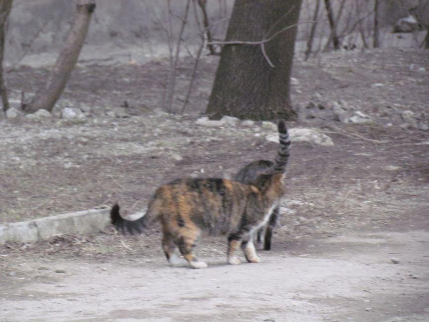Фотопятница: «Планета мартовских котов», фото-18
