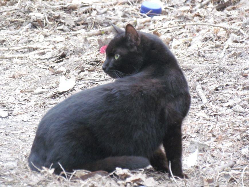 Фотопятница: «Планета мартовских котов», фото-19