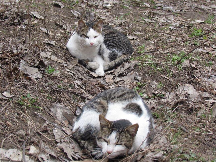 Фотопятница: «Планета мартовских котов», фото-7
