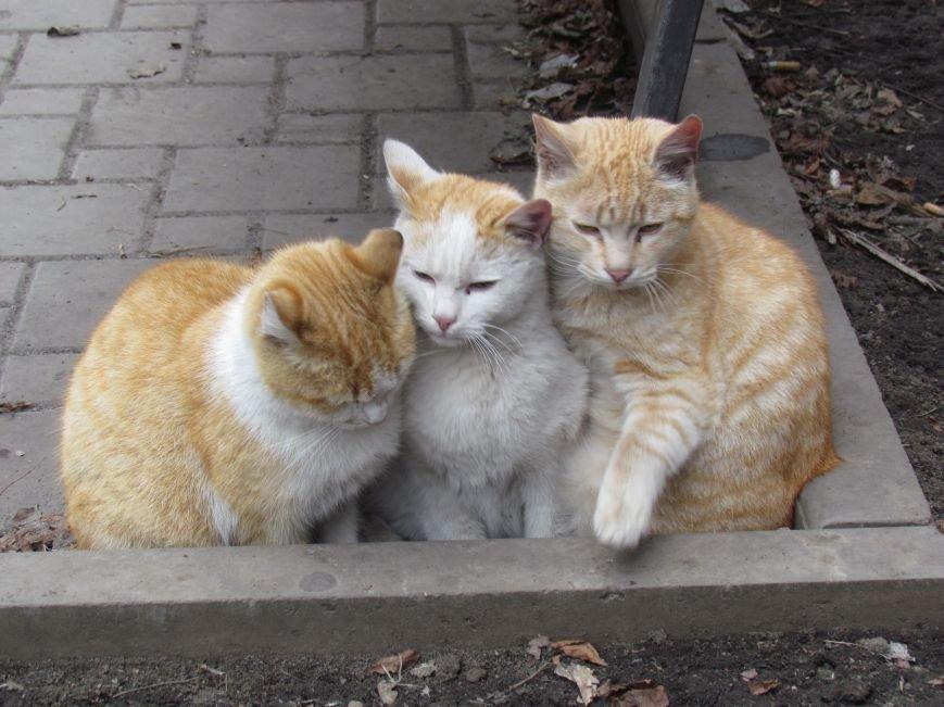 Фотопятница: «Планета мартовских котов», фото-1