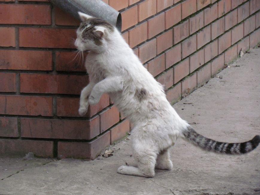 Фотопятница: «Планета мартовских котов», фото-29