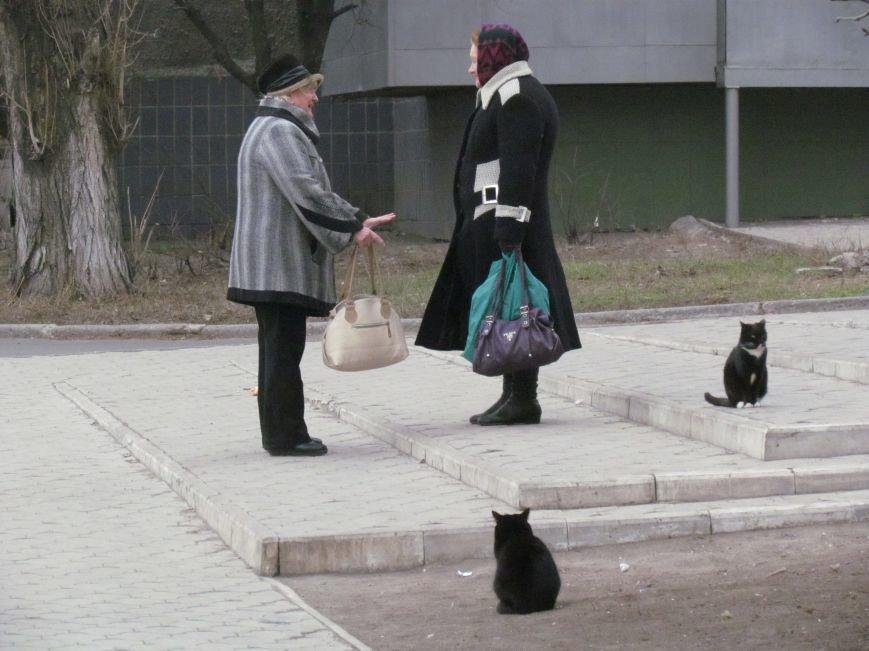 Фотопятница: «Планета мартовских котов», фото-9