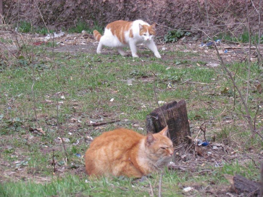 Фотопятница: «Планета мартовских котов», фото-2