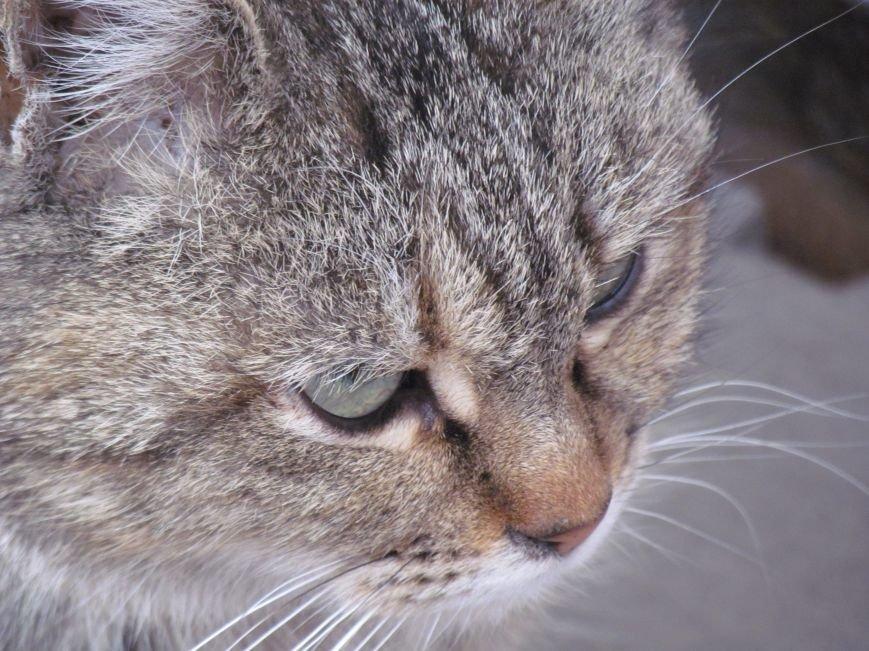 Фотопятница: «Планета мартовских котов», фото-13